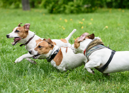 Three dogs playing and racing quickly at summer park