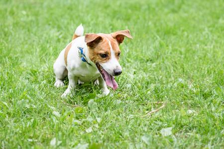 avergonzado: perro travieso que se sienta por el comando avergonzado el castigada por el propietario