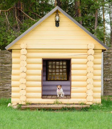 doghouse: Pet dog sitting at big doghouse at back yard Stock Photo