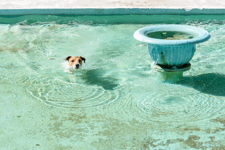 turquoise water: Funny dog swimming in turquoise water pool of fountain Stock Photo