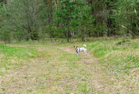 go for: Lets go for a walk with dog at wildlife nature