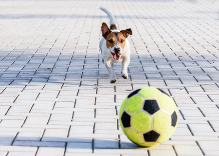 Happy dog playing with a ball at park