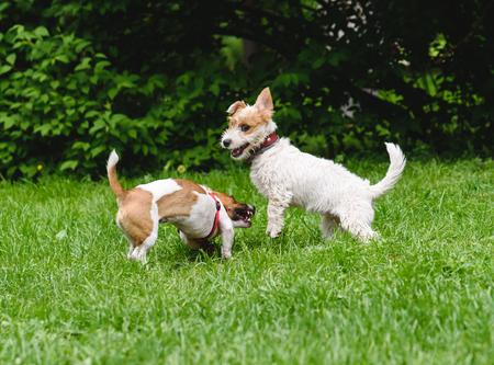 perros jugando: Dos perros divertidos jugando juntos en el parque