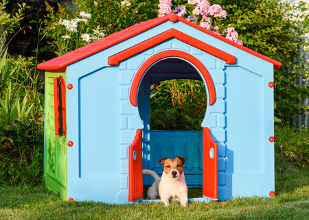 doghouse: Dog lying and resting at colorful doghouse at back yard garden