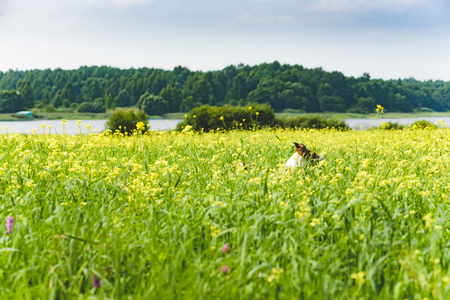 Landscape with dog playing in meadow of blossom yellow flowers