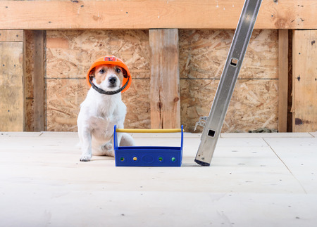 Dog as funny builder wearing helmet at construction site with toolbox