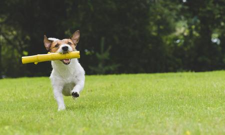 Gelukkige hond speel en het halen stuk speelgoed stok bij achtertuin