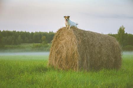 Tranquil scene with mist and dog on hay stack at twilight