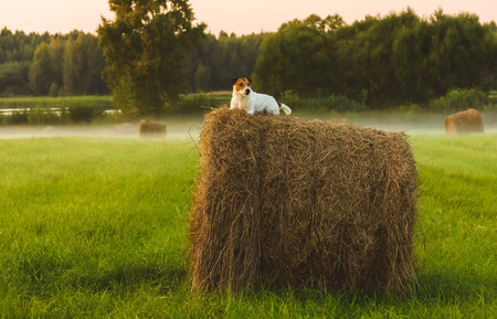 Meadow with hay stacks in fog at sunset