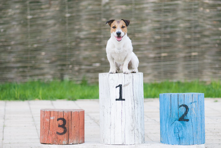 Kampioen hond op een voetstuk op de eerste plaats