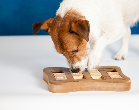 Smart dog playing intelligent sniffing game