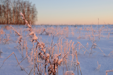 Winter pastoral scenery: field under snow at sunset Stock Photo