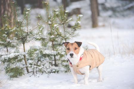 warm jacket: Dog walking at winter morning forest wearing warm jacket