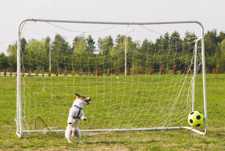 concede: Funny goalkeeper misses a goal Stock Photo