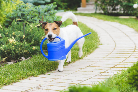 Funny Gardener with a watering can making irrigation Stock Photo