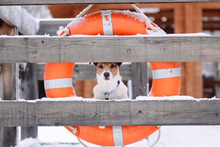 Not a season for swimming. Dog on a beach with lifebuoy.