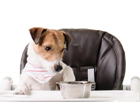 kibble: Dog refuses to eat its kibble food