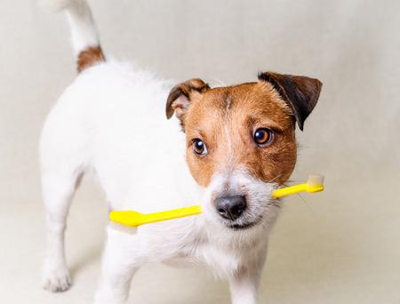 Denk na over hond gezondheid tanden en tandheelkundige zorg Stockfoto