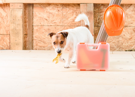 Dog as handyman fetching wrench at construction site Stock Photo