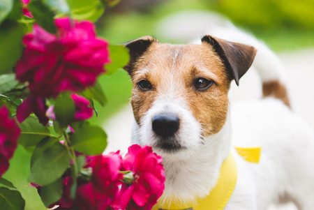 Romantic scene with lovely dog ??and flowers Stock Photo