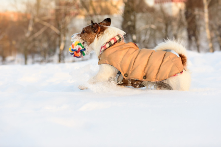 Dog wearing warm outfit having fun in cold snowdrift