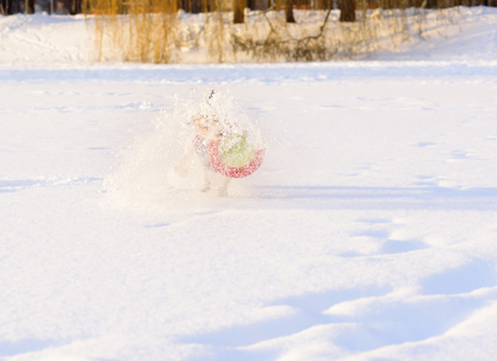 flying disc: Dog playing with toy making splashes of snow