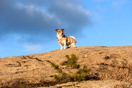 perros vestidos: Perro sentado en la cima de la roca en el soleado día de invierno