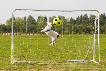 Funny goalkeeper hits ball by head saving goal