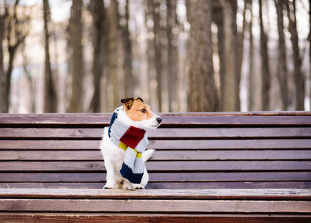 atmospheric: Dog wearing cozy warm scarf sitting on bench at park