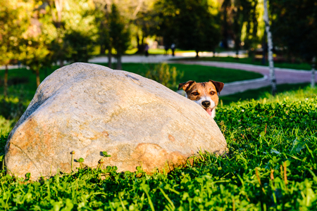 Dog peeking over corner playing hide and seek game at park Stock fotó