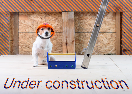 Under construction site with dog as funny builder wearing hard hat Stock Photo