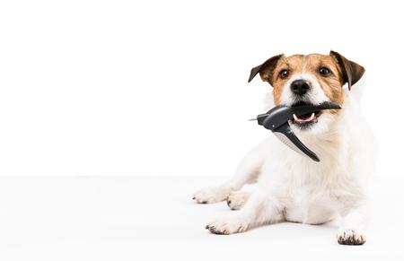 Hond met nagelklipper in de mond heeft nagels nodig Stockfoto