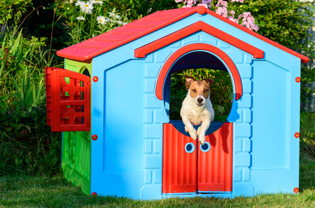 Dog jumping from colorful house at playground at garden