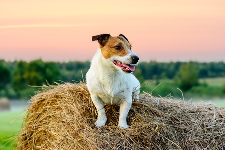 pastureland: Country pastoral scene with dog sitting on haystack at sunset