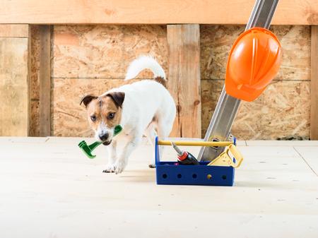 Perro en el sitio de construcción que viene en la cámara y la búsqueda de martillo Foto de archivo - 79325997