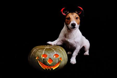 frightful: Cute halloween evil with pumpkin lighten inside on black background