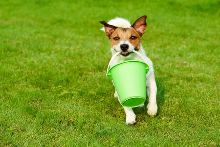 Dog fetching greenery bucket as gardener running on grass
