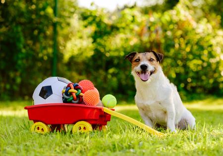 Happy dog ??sitting near wheelbarrow full of real treasures - various kinds of balls