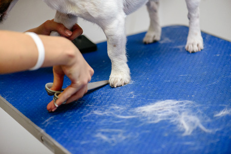 Groomer making haircut with scissors to dog on grooming table