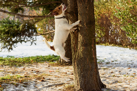 Dog jumping on tree chasing squirrel at winter park