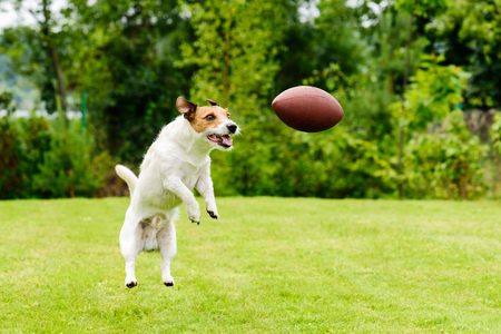 Leisure time at back yard with american football ball and pet 版權商用圖片 - 85168044
