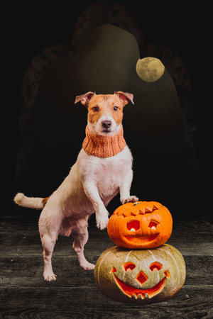 Halloween concept with dog and pumpkins