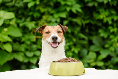 Dog behind table with bowl full of dry food