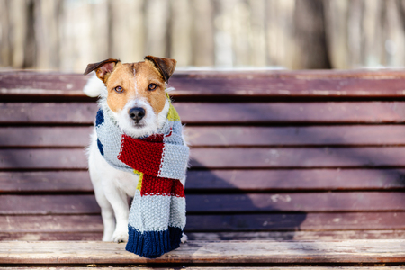 Sunny winter scene with a dog wearing cozy warm knitted scarf Stockfoto