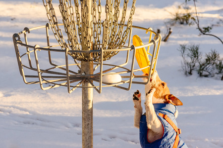Stalemate tough situation at disc golf playground Standard-Bild