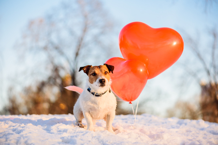 Holiday concept with dog and air balloons for Valentine day, birthday or anniversary Stock fotó