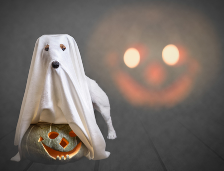 Funny ghost and traditional Halloween pumpkin with scary face at background