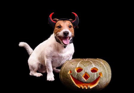 Szczęśliwy uśmiechnięty pies z diabelskimi rogami i dyni Halloween
