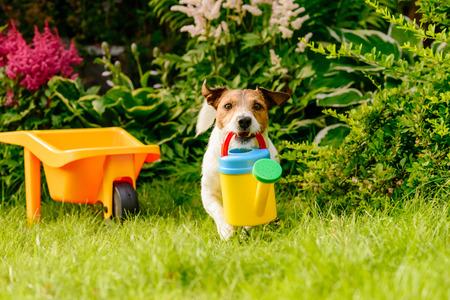 carretilla: Jardinero divertido con regadera plantando flores en el jardín Foto de archivo