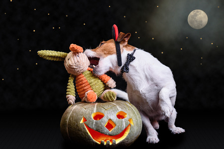 Devils mischief night concept with dog biting rabbit as vampire Stock Photo